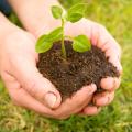 Sustentabilidade - Selos e Serviços